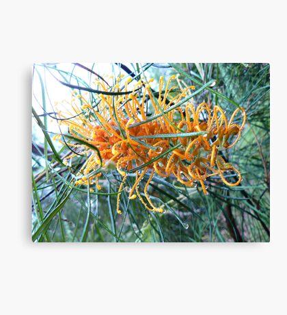 Orange Grevillia with Raindrops Canvas Print