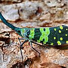 Horned bug, Thailand by John Spies