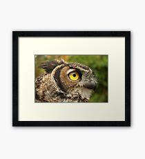Darwin, A Great Horned Owl Framed Print
