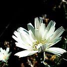 Wild Flower by Shannon Barker