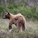Black Bear by Kimberly Palmer