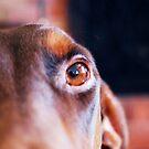 Dog's Eye by Shannon Barker