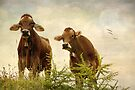 Curious Cows by AnnieSnel