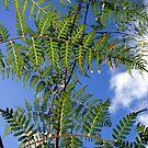 Pteridium esculentum bracken  by Tony Foster