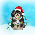 Havanese in Snow with Christmas Lights by aashiarsh