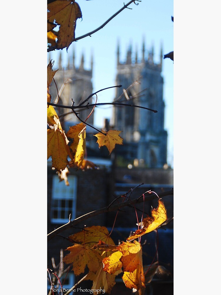 Autumn Leaves In York by berriephotos