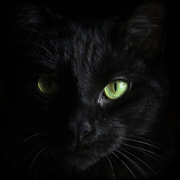 Black Cat by MeowntainCafe