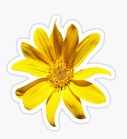 Balsamroot Sticker