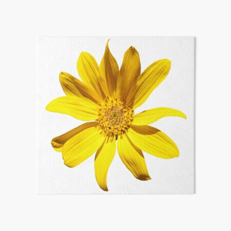 Balsamroot Art Board Print