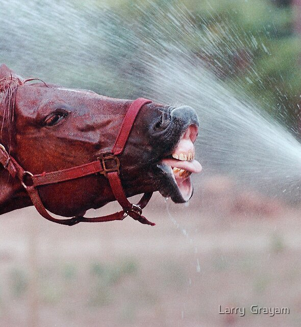 Slick takes a drink by Larry  Grayam