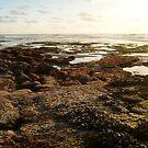 """""""Landscapes & Seascapes"""" by Tim&Paria Sauls"""