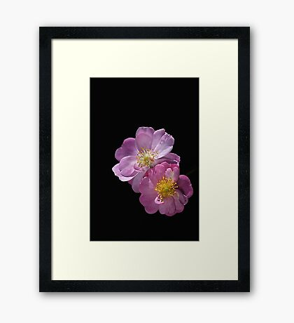 Bush Rose Duet Framed Print
