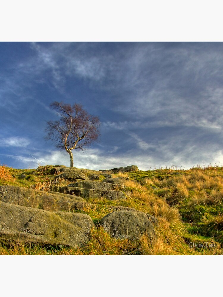 Lone Tree by christait