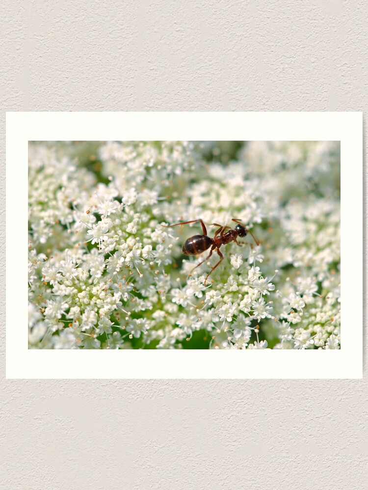 Alternate view of Queen Anne's Ant Art Print