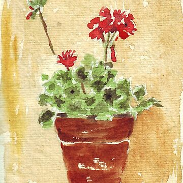 Why grow geraniums in containers? by MareeClarkson