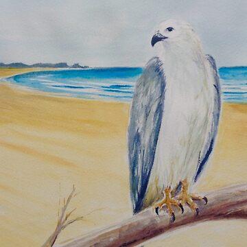 Sea eagle on the beach by Ian Shiel  by Ruckrova