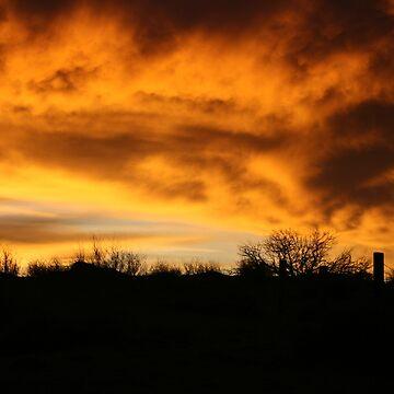 Purnie Sunrise by tanjents