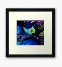 Really Big Fish, Little Fish Framed Print