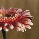 Soft Flower Petals by Debja