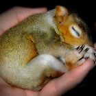 """Sh-Sh-Sh, Baby Sleeping"" by Melinda Stewart Page"
