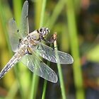 Dragonfly 2 by Martha Medford