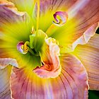 Have a nice day(lily). by alan shapiro