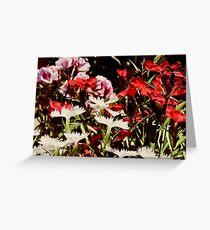 Dianthus * Grußkarte