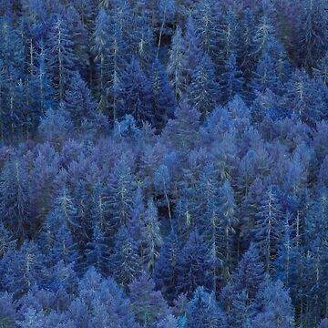 Mystical Blue Forest by CreativeRain
