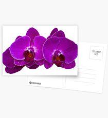 Fuchsia Phalaenopsis Postcards