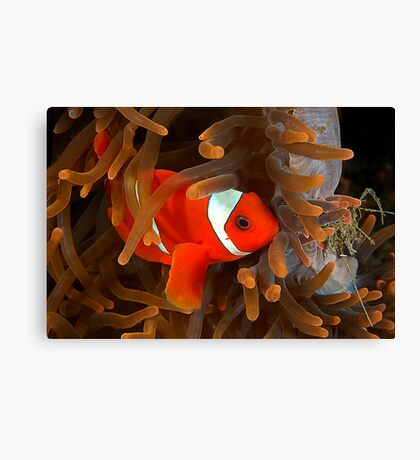 Spine Cheek Canvas Print