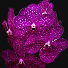 Orchids #9 by photorolandi
