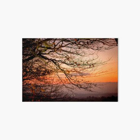 Orange Beech Tree Sunset Art Board Print