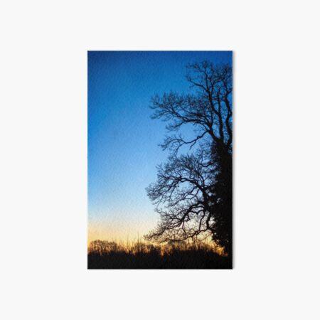 Blue Ash Tree Sunset Art Board Print