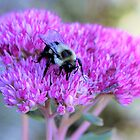 Fuzzy Wuzzy Bumble Bee by Lesliebc