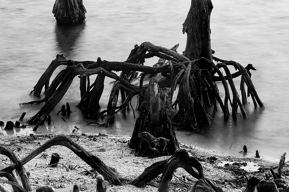 New Orleans's Ghostly Cypress Knees In Lake Ponchartrain In Black And White by Kay Brewer