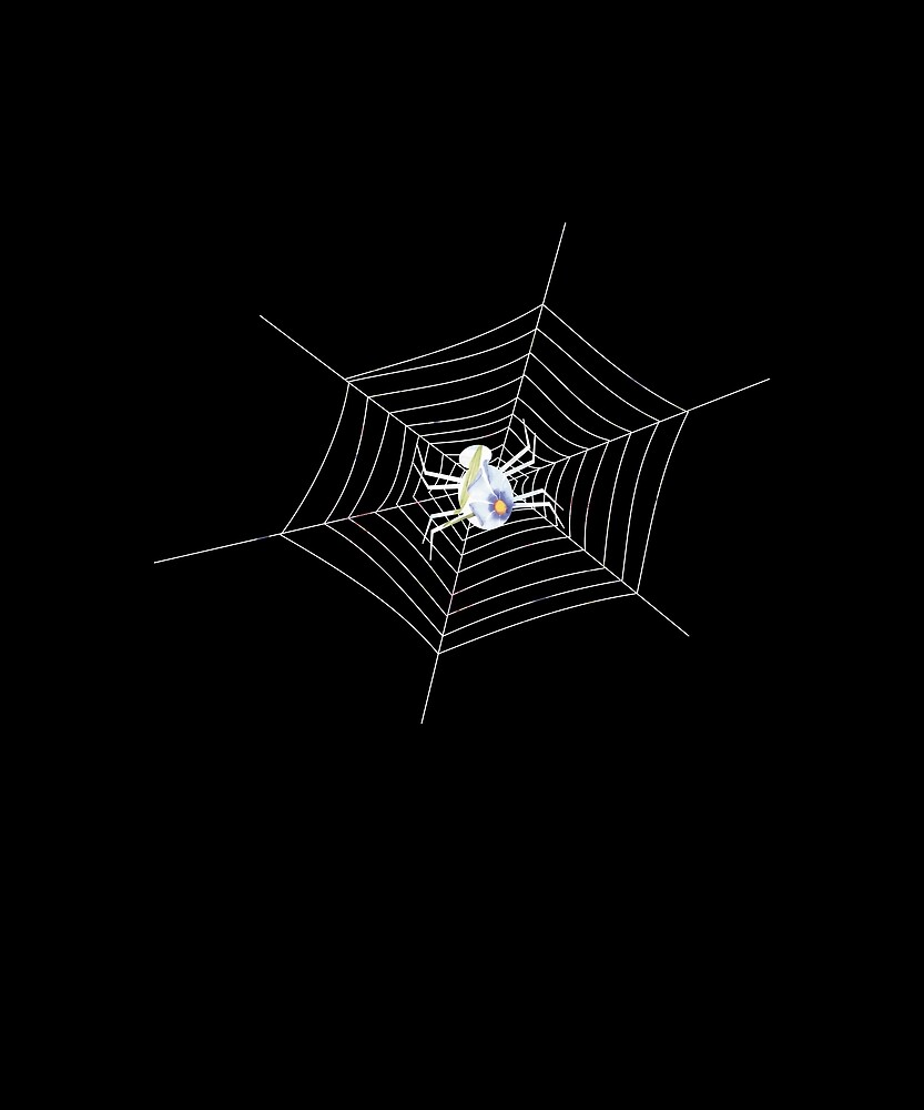 spider by MisterSmithers