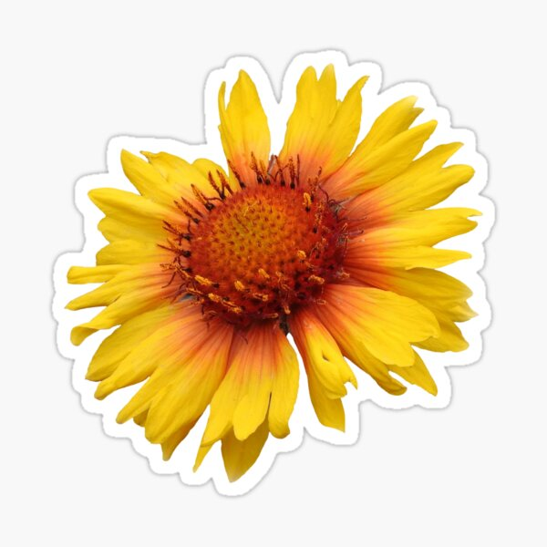 Blanket-Flower Sticker