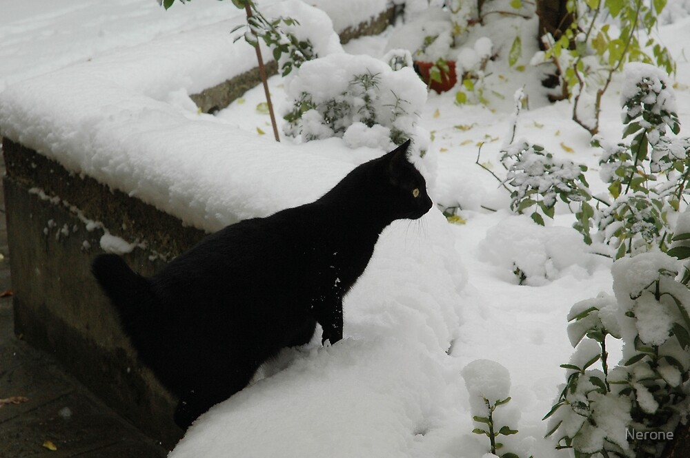 Snow Cat by Nerone