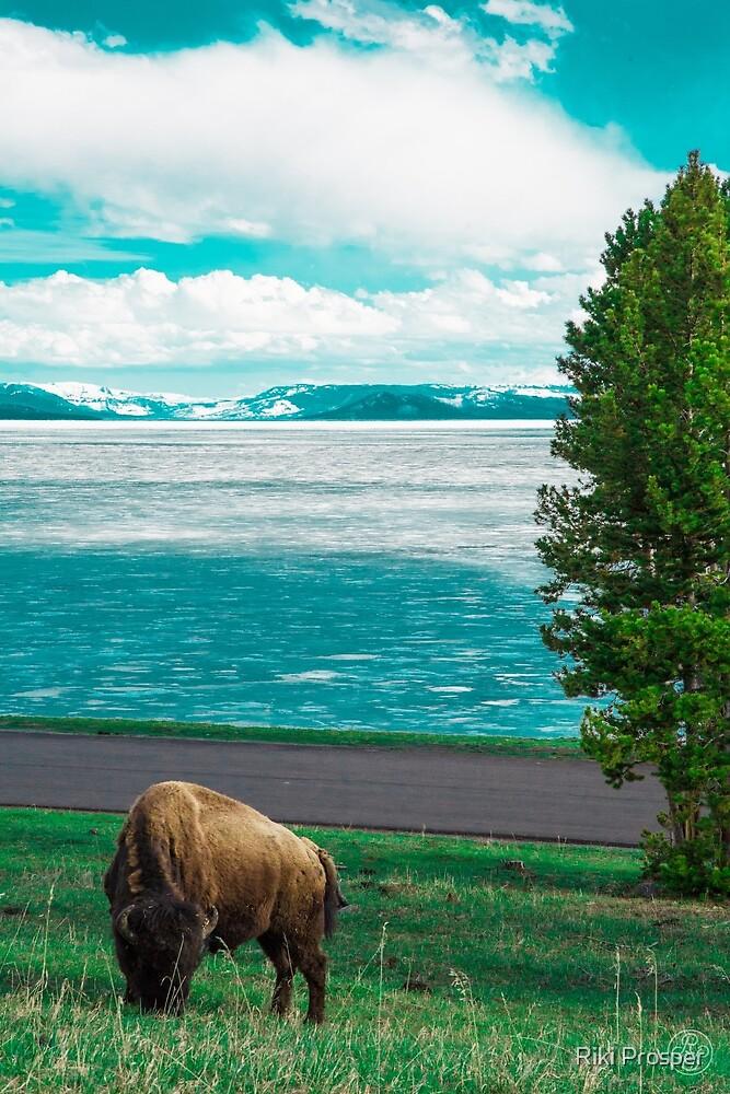 Wyoming by Riki Prosper