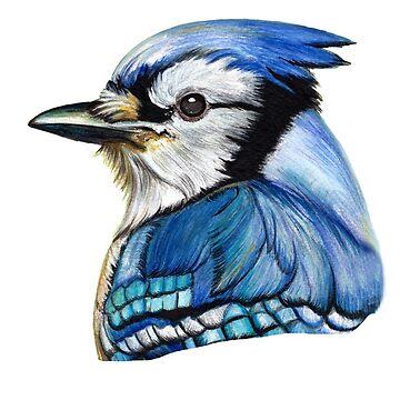 bluejay portrait by ilustradsn