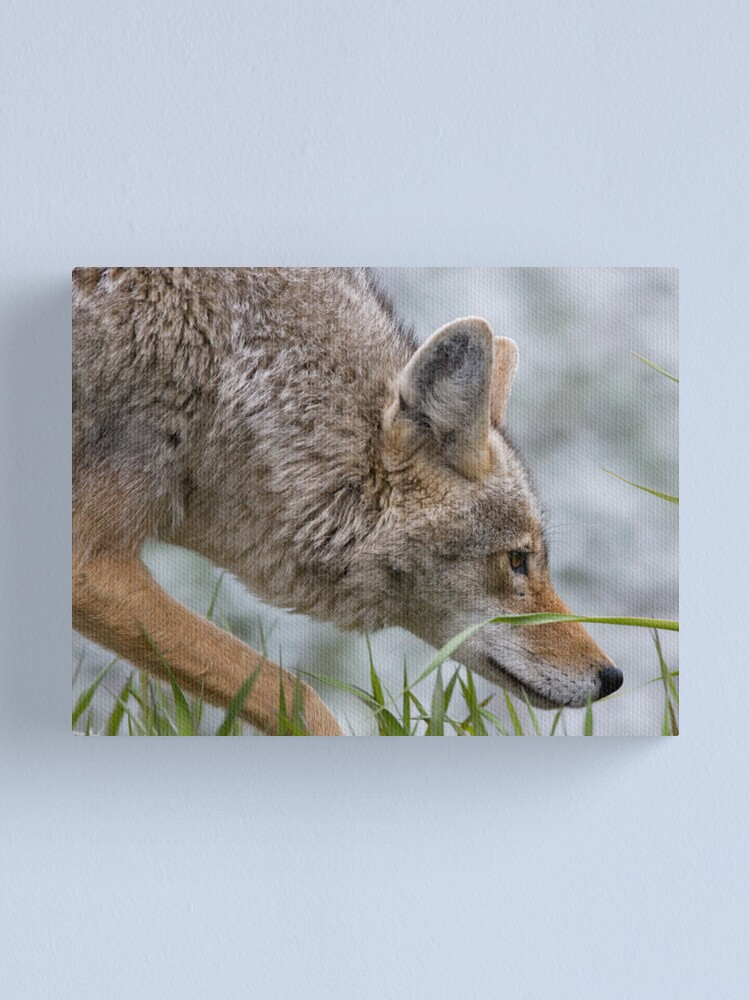 Alternate view of Hot On The Trail... Canvas Print