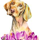 Angelic | Vizsla Dog and Crocus Watercolor Painting by namibear