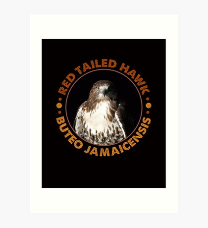Beautiful Red Tailed Hawk Portrait For Falconers and Birders  Art Print