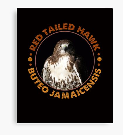 Beautiful Red Tailed Hawk Portrait For Falconers and Birders  Canvas Print