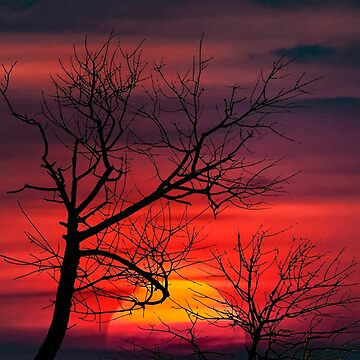 Sunset Nature Scene by DFLCreative