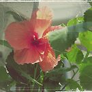 daddy's favorite flower by rebeccacuriel