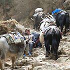 Sleeping between yaks by shireengol