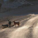 Cretan goats by shireengol