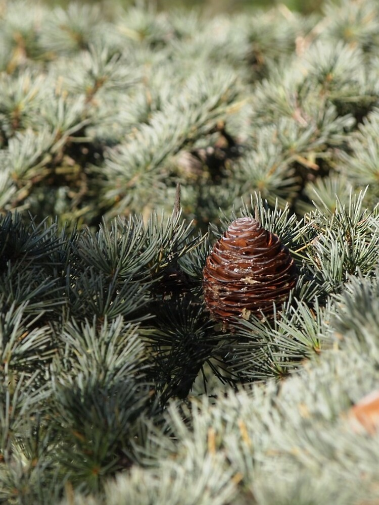 In the woods - Fir Tree by douglasewelch