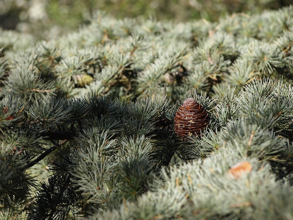 In the woods - Fir Tree by Douglas E.  Welch